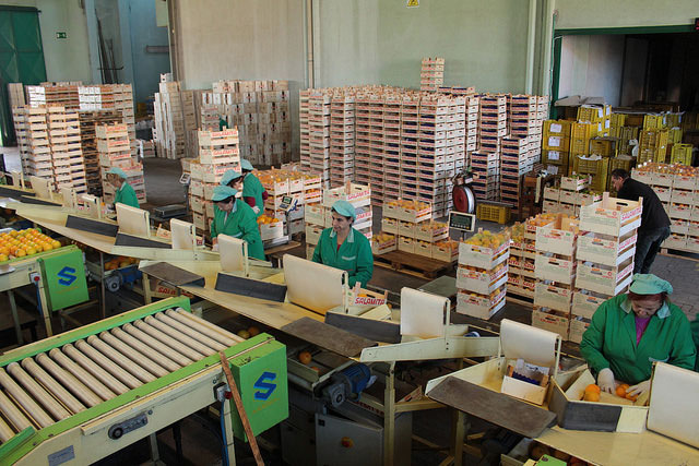 visit to salamita oranges company by eprojectconsult